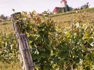 Tip na predĺžený víkend plný vína a kultúry? Objavte festival Kerekdomb iba pár kilometrov od hraníc!